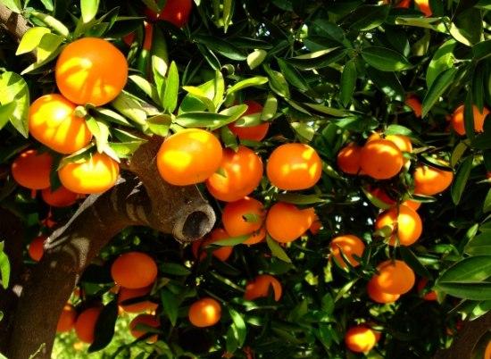Екскурзия КОСТА АЗААР – ПОРТОКАЛОВИЯ БРЯГ - Посетете още един от испанските курорти с неповторим колорит и атмосфера. Широка пясъчна ивица, кристално чиста вода и дъхав аромат от цветовете на портокалови гори, които са навсякъде около вас.